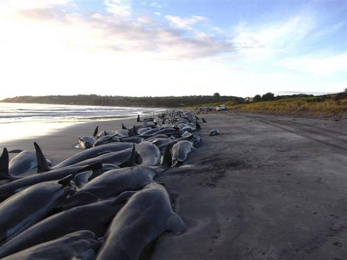 140 ballenas varadas.