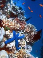 150_corales