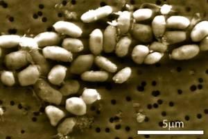 Bacteria con arsénico