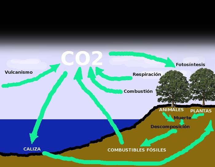 Ciclo del Carbono en la naturaleza.