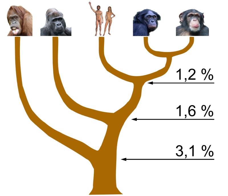 Diferencias porcentuales entre pares de bases del ADN de los homínidos
