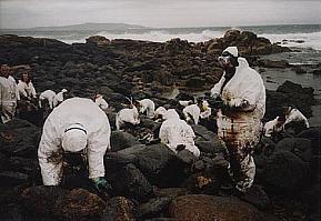 Voluntarios recogiendo chapapote del Prestige en Galicia.