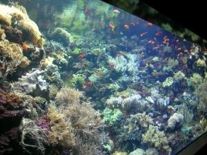 Acuario de arrecife (Foto A.Castro Loroparque -Tenerife)