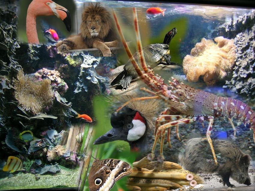 http://www.ciberdroide.com/wordpress/wp-content/uploads/biodiversidad.jpg