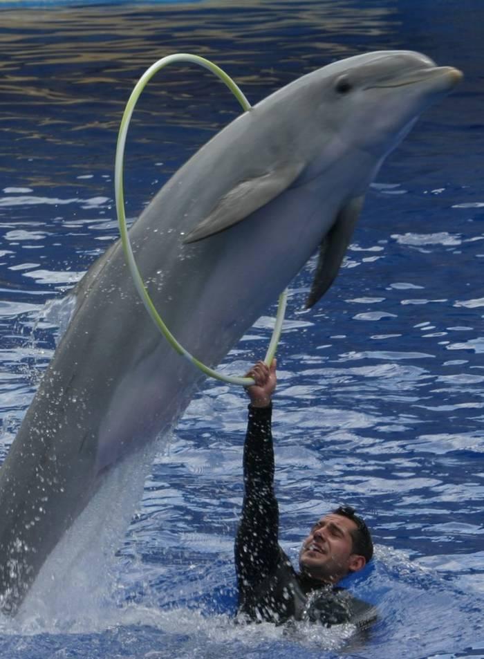 ¿Tratamos bien a nuestros amigos los delfines?