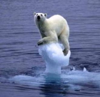 Oso polar luchando por su supervivencia.
