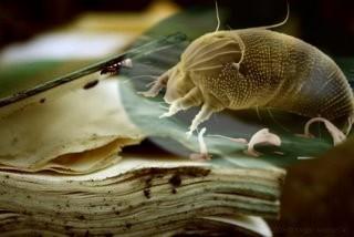 Libro viejo devorado por los ácaros.