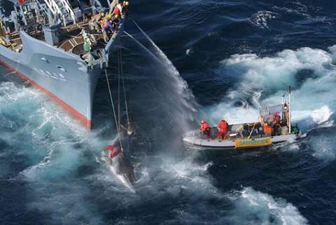 Los ecologistas están haciendo una gran labor en defensa de las ballenas.