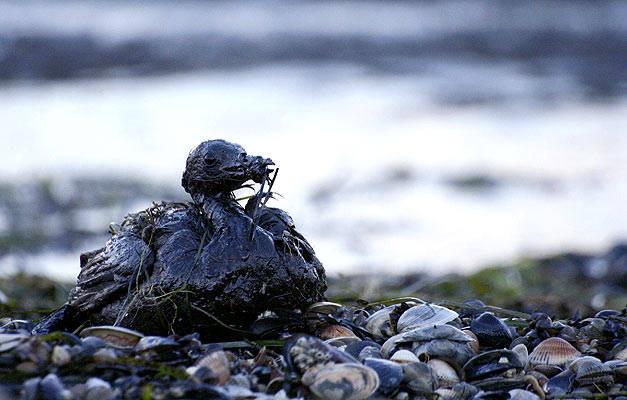 Contaminación por vertido de petróleo.