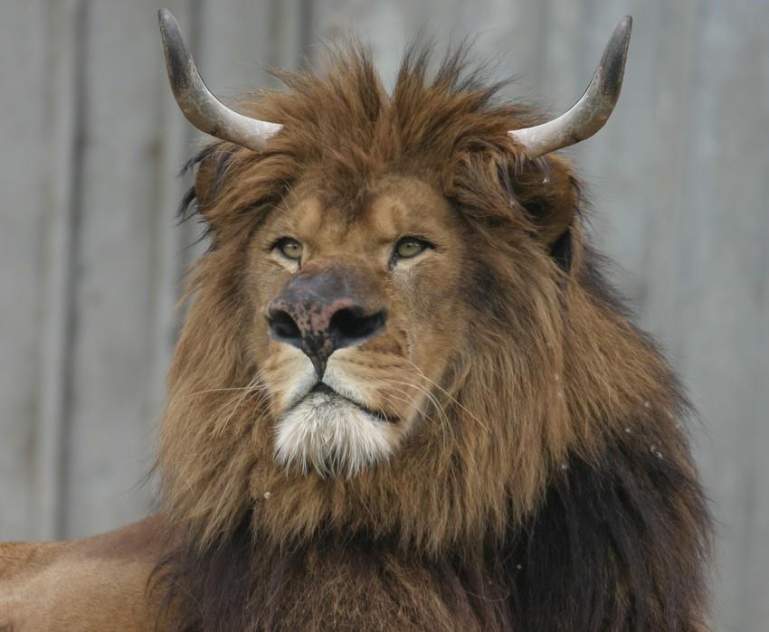 toro-leon